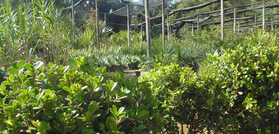 A Floralia Plantas Floridas Ornamentais E Frutiferas Em